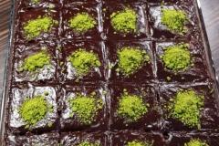 Islak-kek-Cikolatali